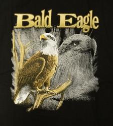 """T-shirt  """" Bald eagle """"  Zwart"""